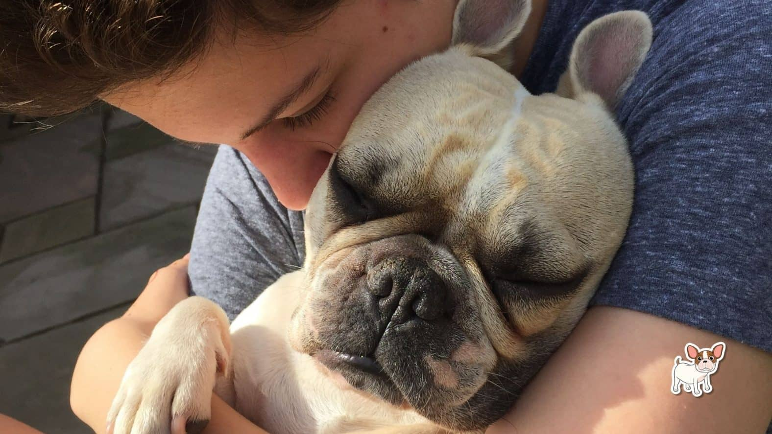 does my frenchie really love me?